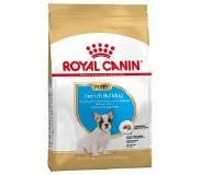 Royal Canin Canine French Bulldog Junior/Puppy Dry 3 kg